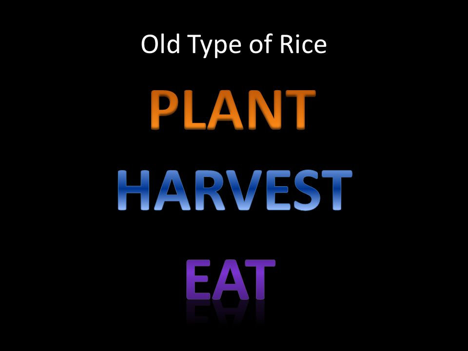 Old Type of Rice