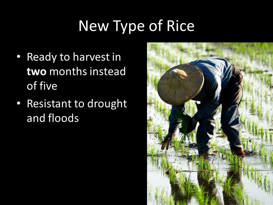 New Type of Rice