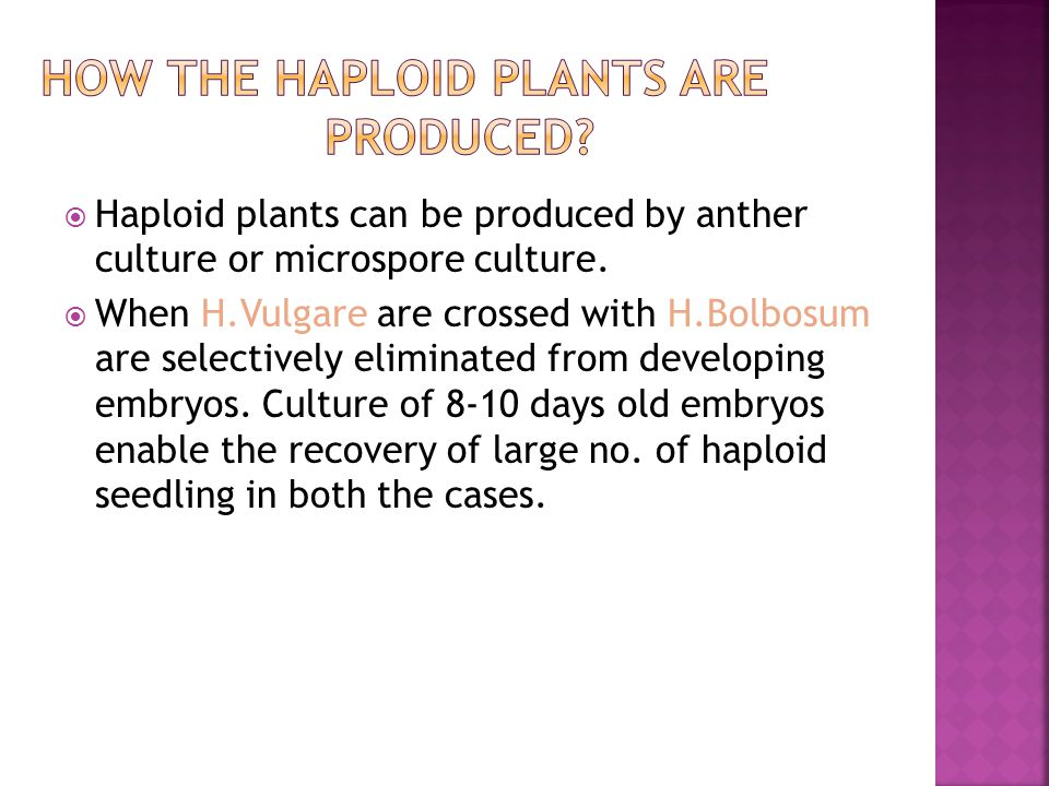  Haploid plants can be produced by anther culture or microspore culture.