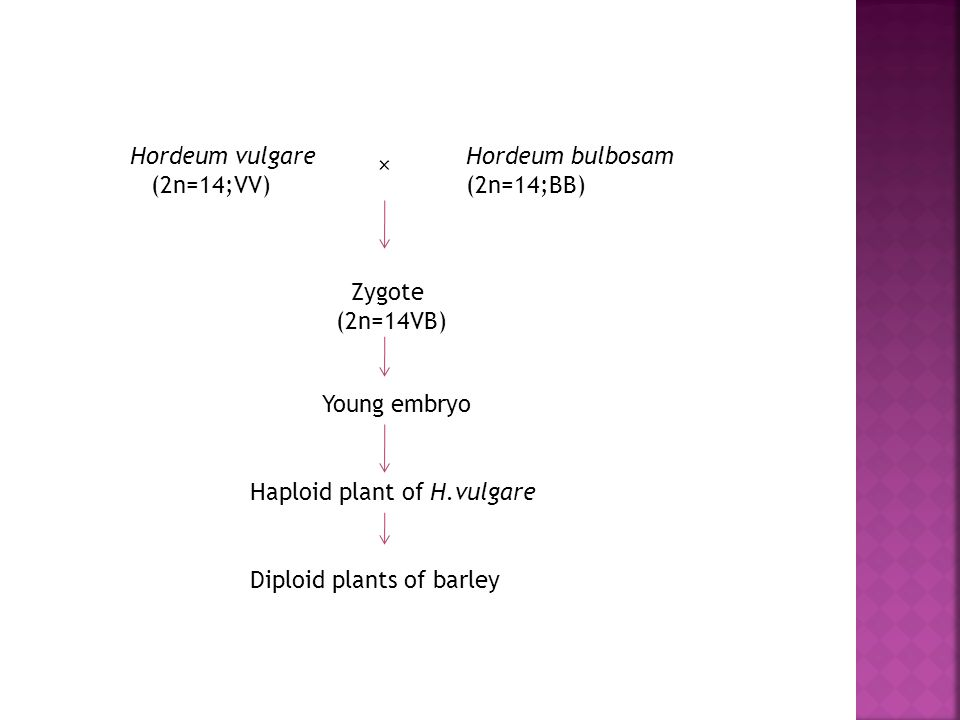 Haploid plants can be produced by anther culture or microspore culture.  When H.Vulgare are crossed with H.Bolbosum are selectively eliminated from