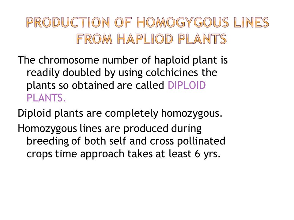 The chromosome number of haploid plant is readily doubled by using colchicines the plants so obtained are called DIPLOID PLANTS.