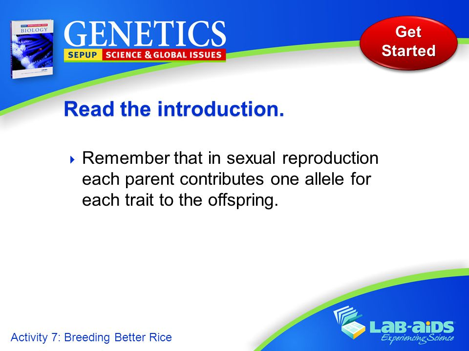 Activity 7: Breeding Better Rice Get Started  Remember that in sexual reproduction each parent contributes one allele for each trait to the offspring.