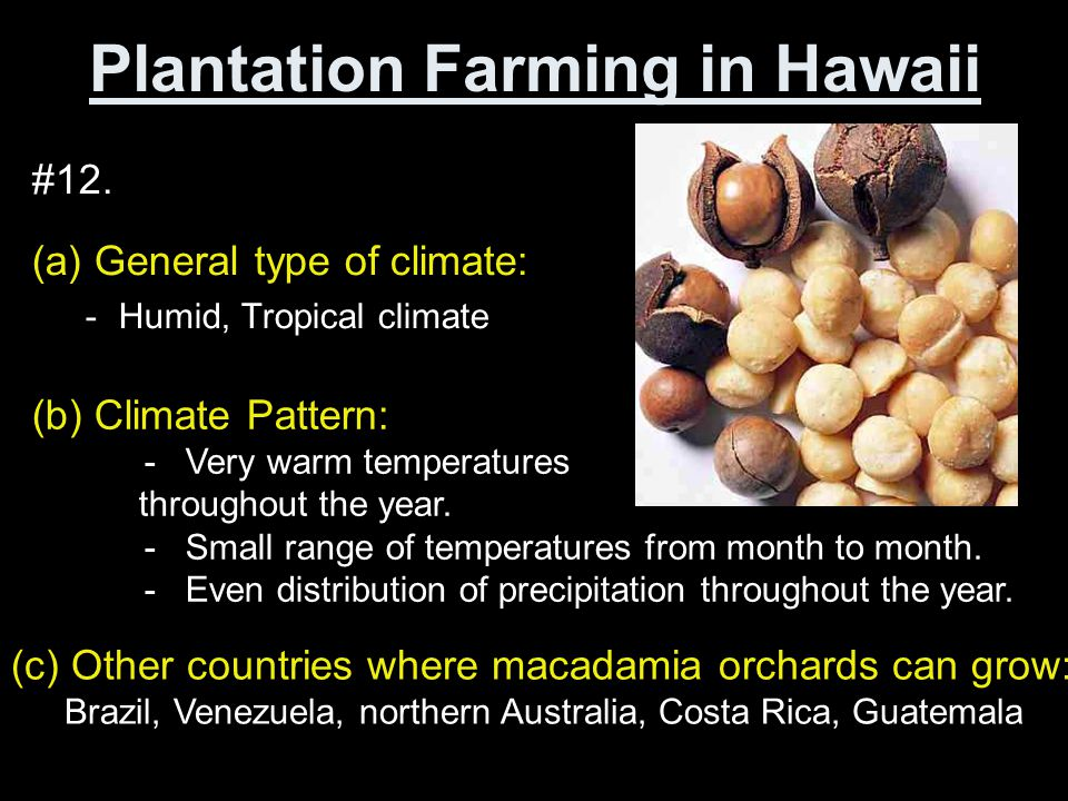 Plantation Farming in Hawaii Page 152-153 Questions 12 & 13 An Agribusiness in the Philippines Page 156-157 Questions 17