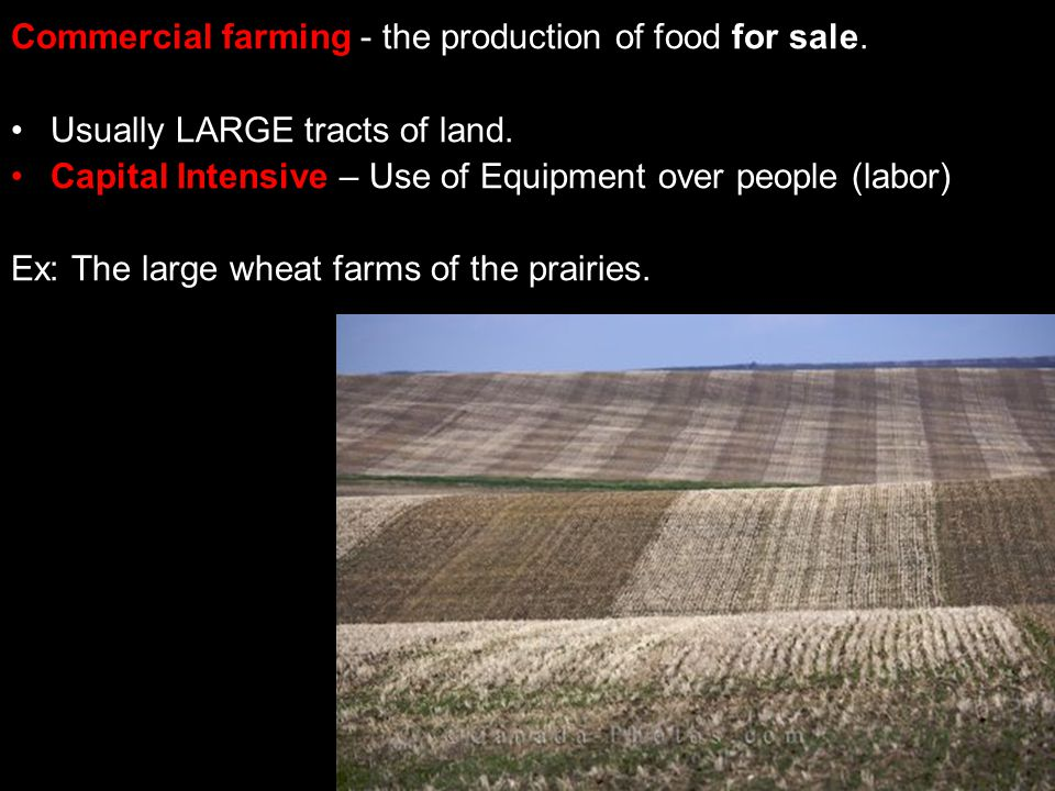 Commercial farming - the production of food for sale.