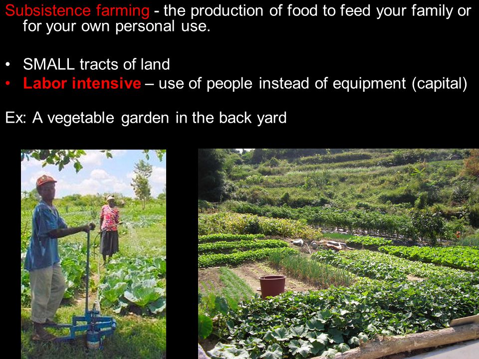 Subsistence farming - the production of food to feed your family or for your own personal use.