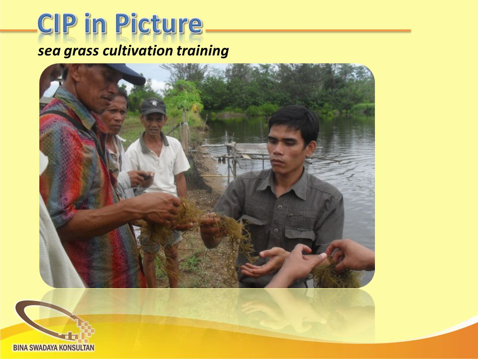 sea grass cultivation training