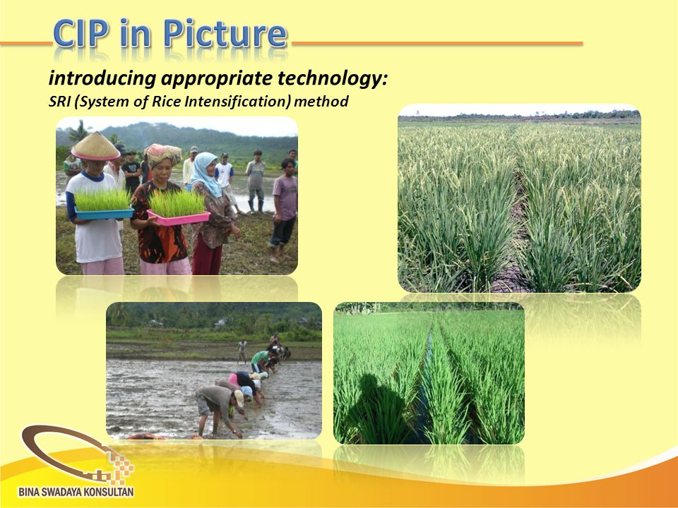 introducing appropriate technology: SRI (System of Rice Intensification) method