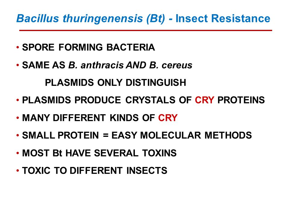 SPORE FORMING BACTERIA SAME AS B. anthracis AND B. cereus PLASMIDS ONLY DISTINGUISH PLASMIDS PRODUCE CRYSTALS OF CRY PROTEINS MANY DIFFERENT KINDS OF