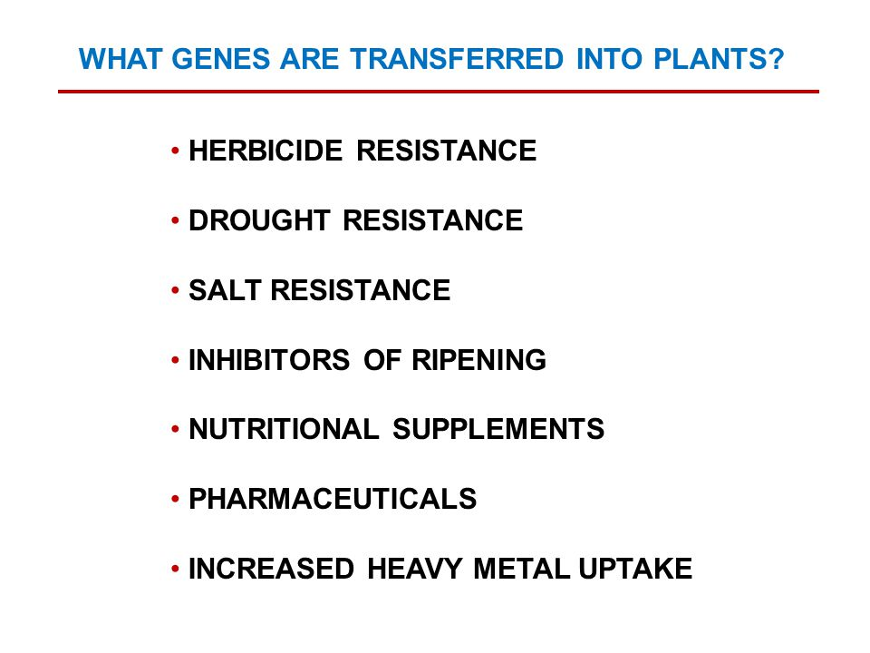 WHAT GENES ARE TRANSFERRED INTO PLANTS? HERBICIDE RESISTANCE DROUGHT RESISTANCE SALT RESISTANCE INHIBITORS OF RIPENING NUTRITIONAL SUPPLEMENTS PHARMAC