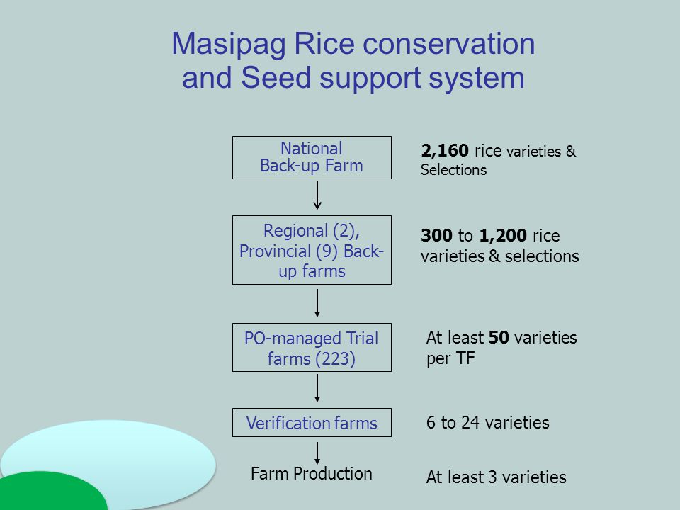 Masipag Rice conservation and Seed support system National Back-up Farm 2,160 rice varieties & Selections Regional (2), Provincial (9) Back- up farms