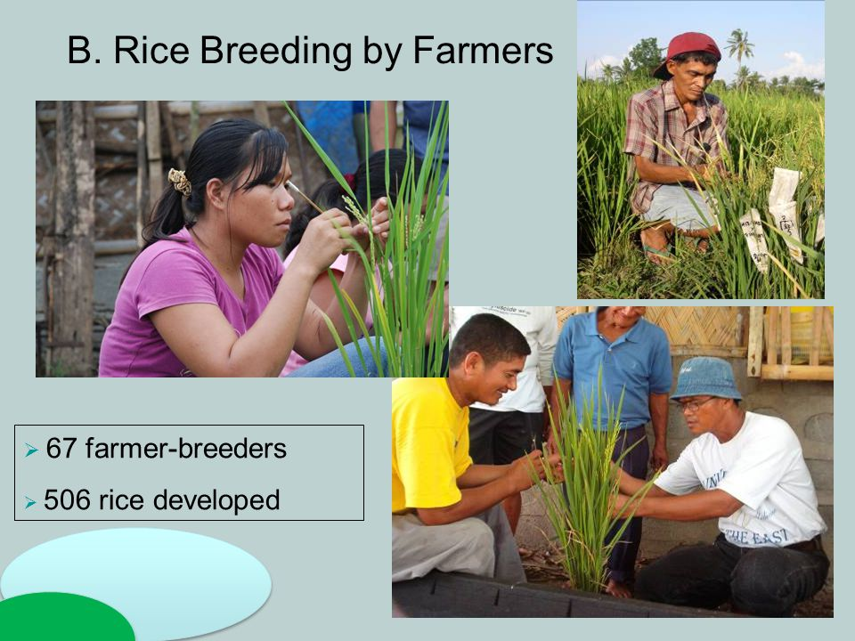 B. Rice Breeding by Farmers  67 farmer-breeders  506 rice developed