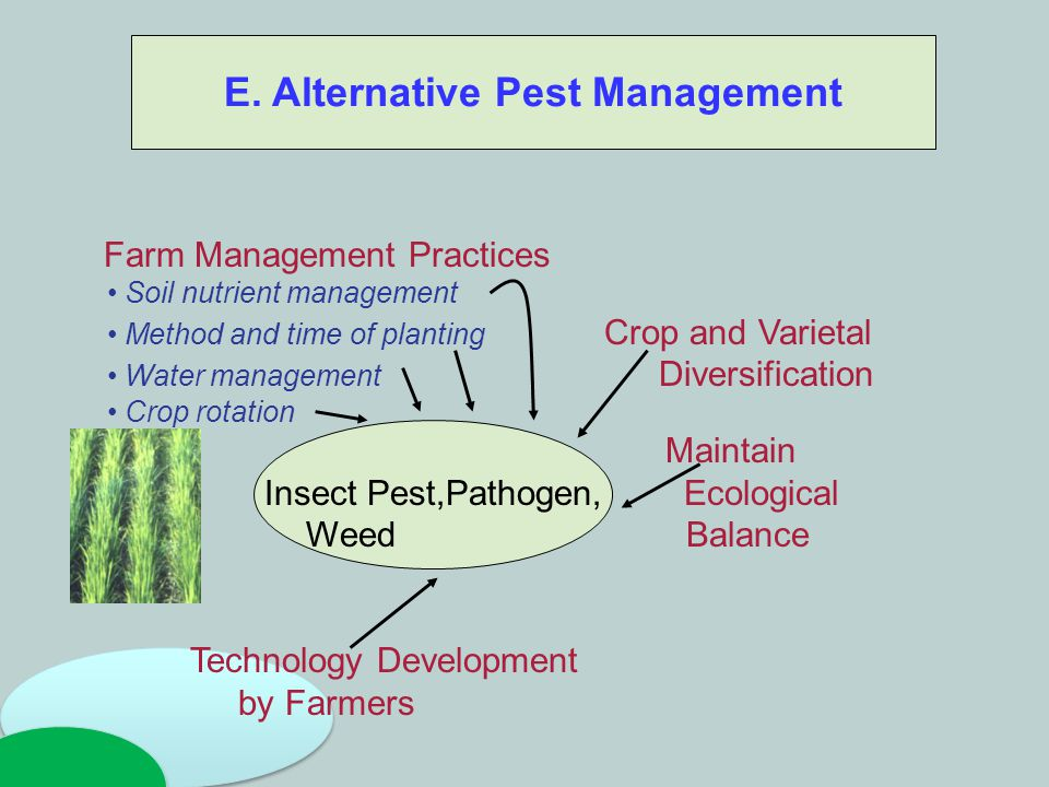 Soil fertility E. Alternative Pest Management Farm Management Practices Soil nutrient management Method and time of planting Crop and Varietal Water m