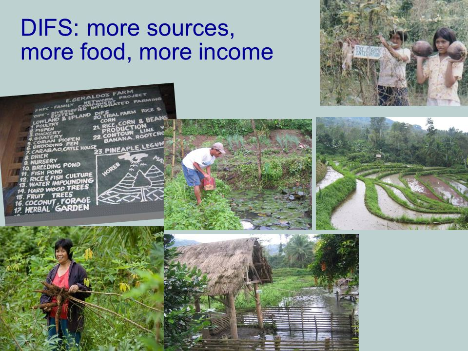 DIFS: more sources, more food, more income