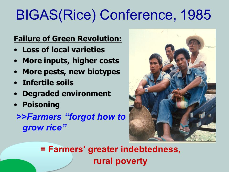 BIGAS(Rice) Conference, 1985 Failure of Green Revolution: Loss of local varieties More inputs, higher costs More pests, new biotypes Infertile soils Degraded environment Poisoning >>Farmers forgot how to grow rice = Farmers' greater indebtedness, rural poverty