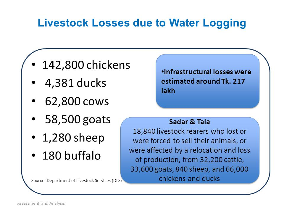142,800 chickens 4,381 ducks 62,800 cows 58,500 goats 1,280 sheep 180 buffalo Source: Department of Livestock Services (DLS) Livestock Losses due to Water Logging Assessment and Analysis Infrastructural losses were estimated around Tk.