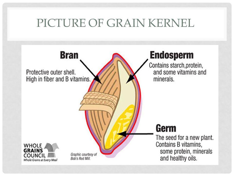 PICTURE OF GRAIN KERNEL