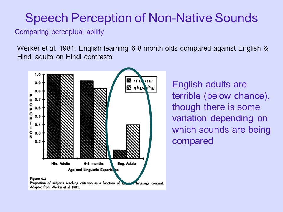 Speech Perception of Non-Native Sounds Comparing perceptual ability Werker et al. 1981: English-learning 6-8 month olds compared against English & Hin