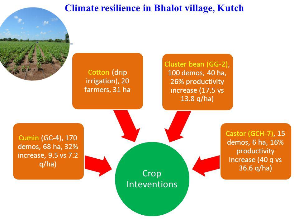 Climate resilience in Bhalot village, Kutch Crop Inteventions Cumin (GC-4), 170 demos, 68 ha, 32% increase, 9.5 vs 7.2 q/ha) Cotton (drip irrigation),