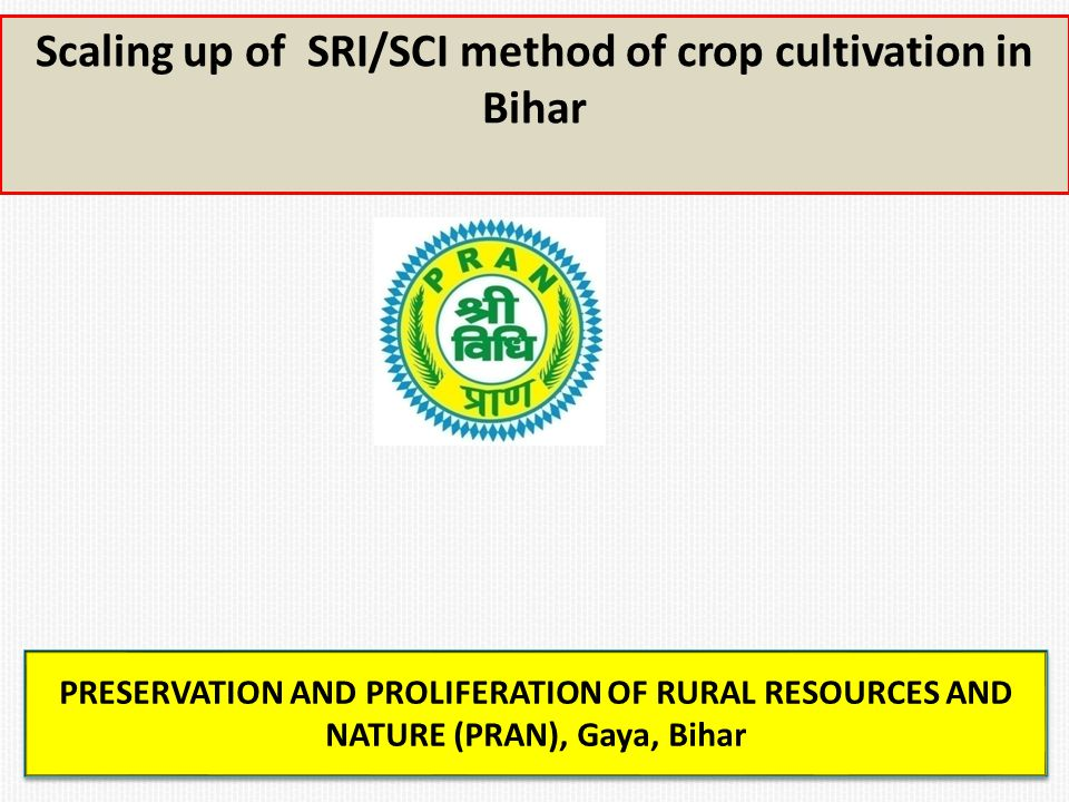 Scaling up of SRI/SCI method of crop cultivation in Bihar PRESERVATION AND PROLIFERATION OF RURAL RESOURCES AND NATURE (PRAN), Gaya, Bihar