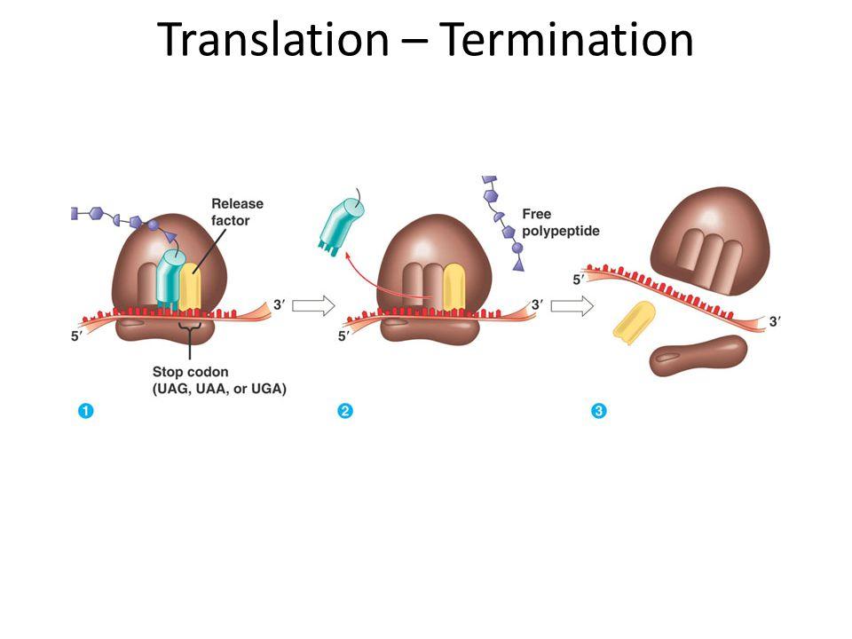 Translation – Termination