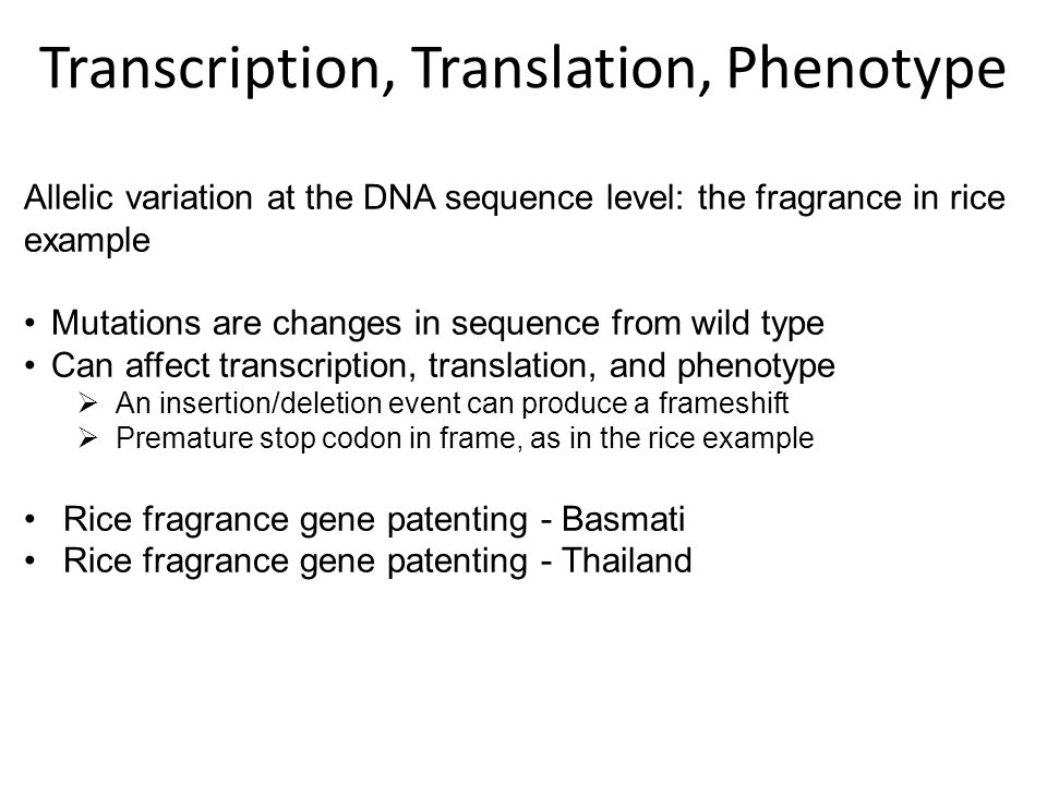 Allelic variation at the DNA sequence level: the fragrance in rice example Mutations are changes in sequence from wild type Can affect transcription, translation, and phenotype  An insertion/deletion event can produce a frameshift  Premature stop codon in frame, as in the rice example Rice fragrance gene patenting - Basmati Rice fragrance gene patenting - Thailand Transcription, Translation, Phenotype