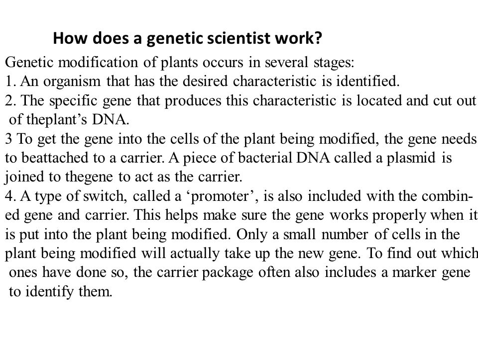 Genetic modification of plants occurs in several stages: 1. An organism that has the desired characteristic is identified. 2. The specific gene that p