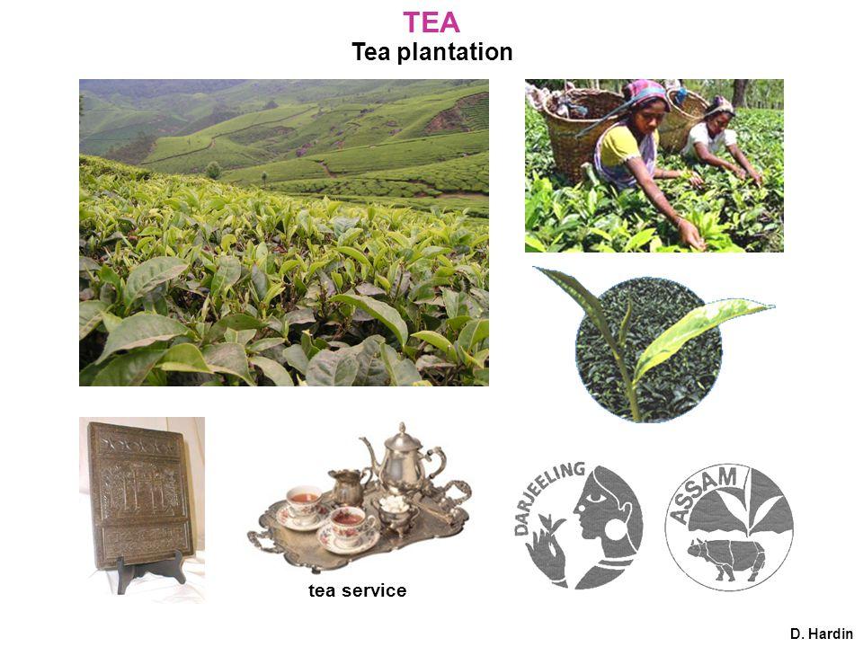 Tea plantation tea service D. Hardin