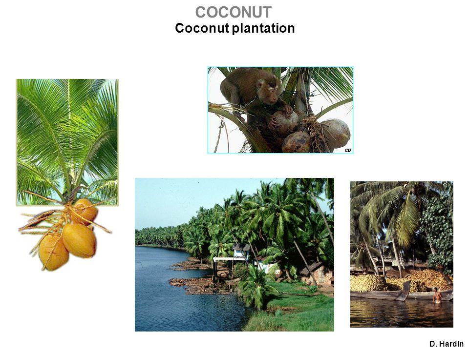 Coconut plantation D. Hardin