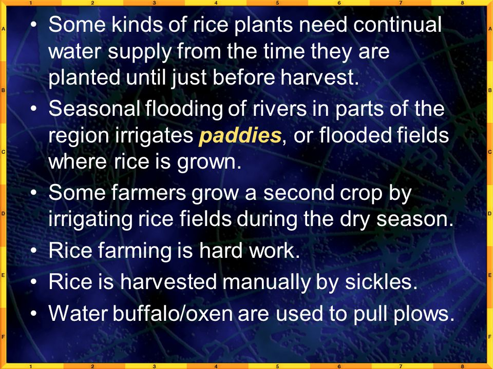 Some kinds of rice plants need continual water supply from the time they are planted until just before harvest. Seasonal flooding of rivers in parts o