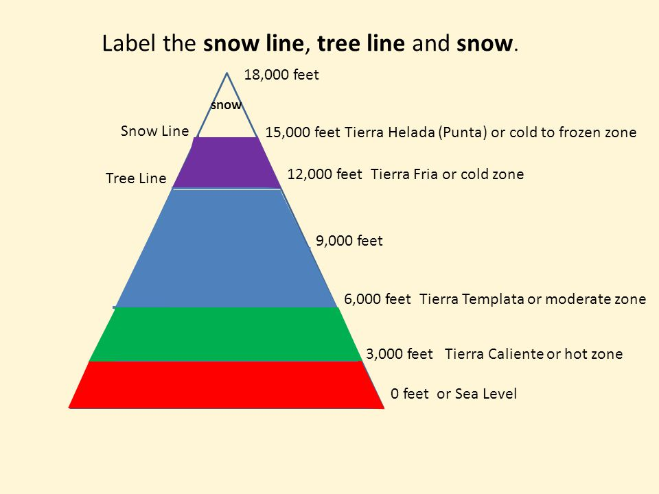 Label the snow line, tree line and snow.