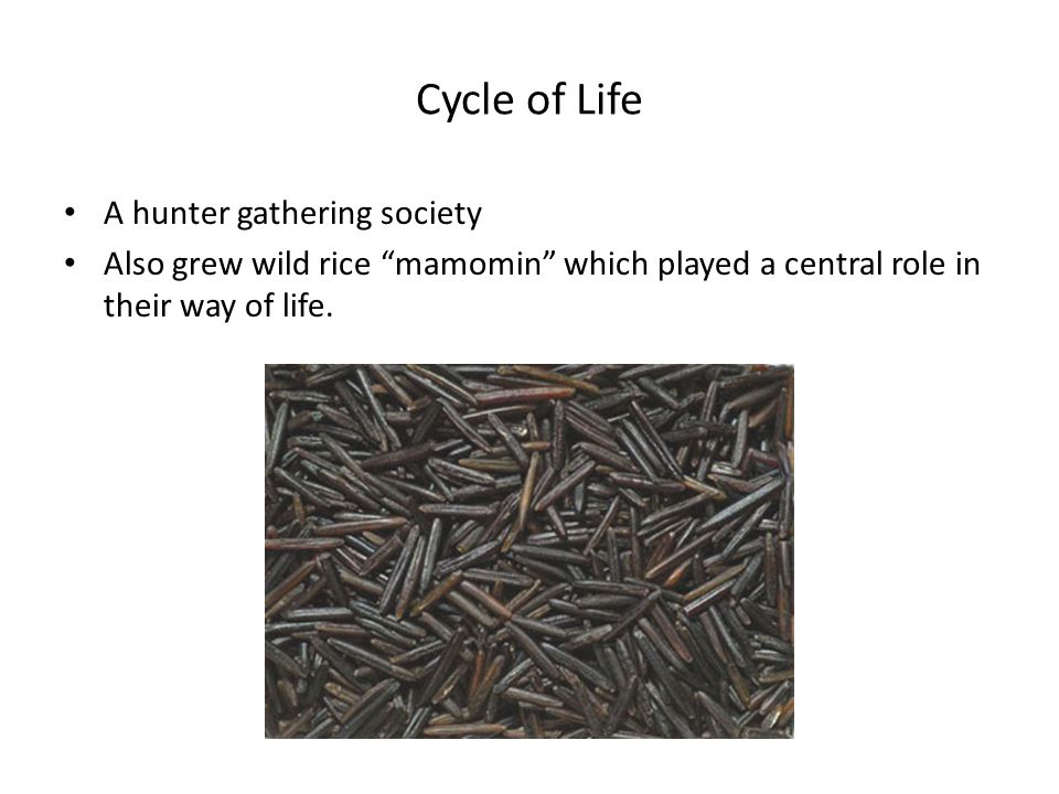 Cycle of Life A hunter gathering society Also grew wild rice mamomin which played a central role in their way of life.