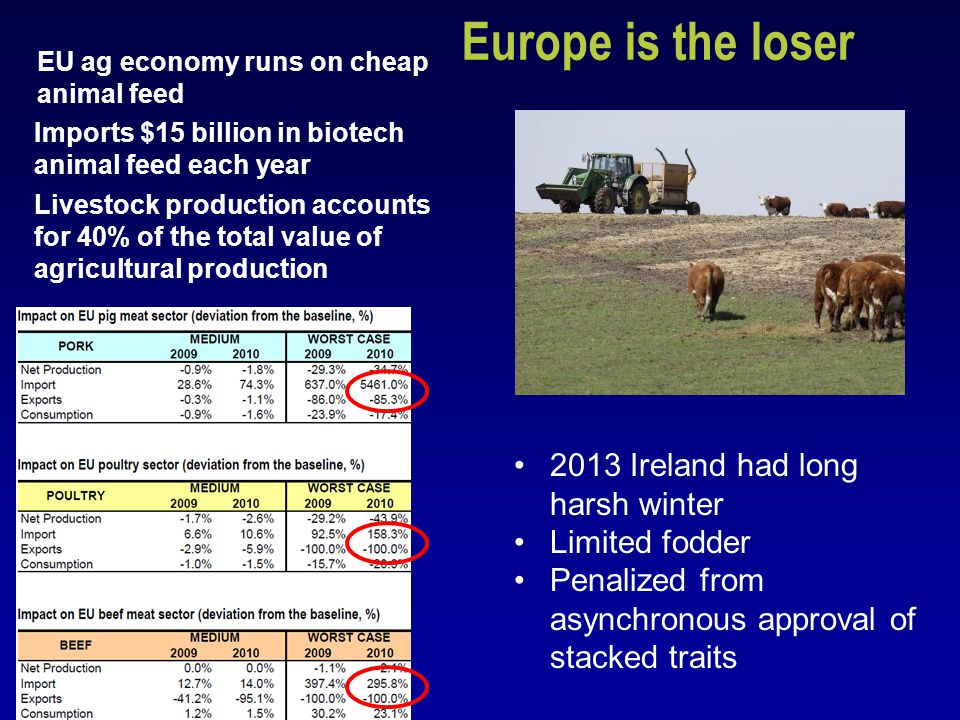 http://ec.europa.eu/agriculture/envir/gmo/economic_impactGMOs_en.pdf DG Agri Report Europe is the loser Livestock production accounts for 40% of the total value of agricultural production EU ag economy runs on cheap animal feed Imports $15 billion in biotech animal feed each year 2013 Ireland had long harsh winter Limited fodder Penalized from asynchronous approval of stacked traits