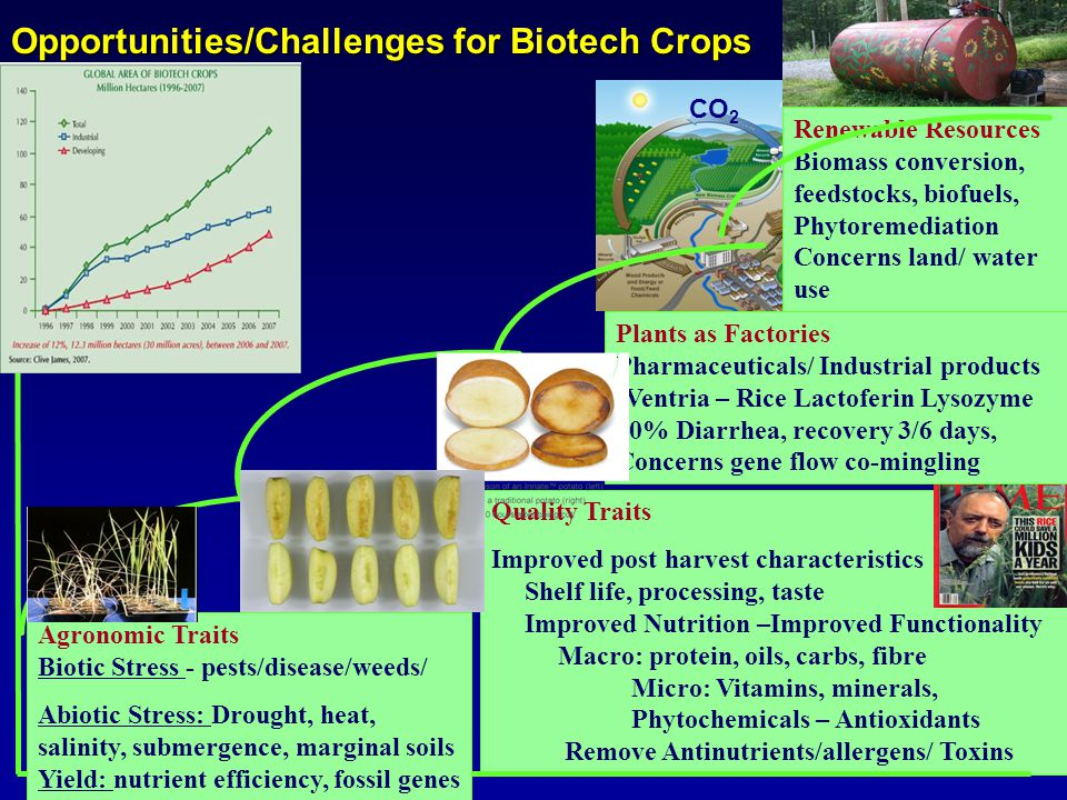 Quality Traits Improved post harvest characteristics Shelf life, processing, taste Improved Nutrition –Improved Functionality Macro: protein, oils, carbs, fibre Micro: Vitamins, minerals, Phytochemicals – Antioxidants Remove Antinutrients/allergens/ Toxins Opportunities/Challenges for Biotech Crops CO 2 Agronomic Traits Biotic Stress - pests/disease/weeds/ Abiotic Stress: Drought, heat, salinity, submergence, marginal soils Yield: nutrient efficiency, fossil genes Value Renewable Resources Biomass conversion, feedstocks, biofuels, Phytoremediation Concerns land/ water use Plants as Factories Pharmaceuticals/ Industrial products (Ventria – Rice Lactoferin Lysozyme 30% Diarrhea, recovery 3/6 days, Concerns gene flow co-mingling