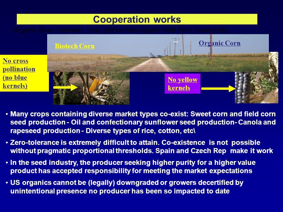 Cooperation works No yellow kernels Organic Blue Cornfield near yellow non-organic field Fred Yoder Ohio No cross pollination (no blue kernels) Biotech Corn Organic Corn Many crops containing diverse market types co-exist: Sweet corn and field corn seed production - Oil and confectionary sunflower seed production- Canola and rapeseed production - Diverse types of rice, cotton, etc\ Zero-tolerance is extremely difficult to attain.