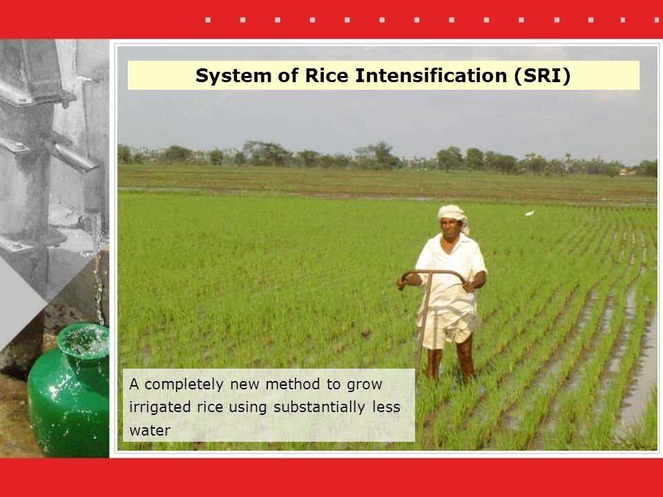 System of Rice Intensification (SRI) A completely new method to grow irrigated rice using substantially less water
