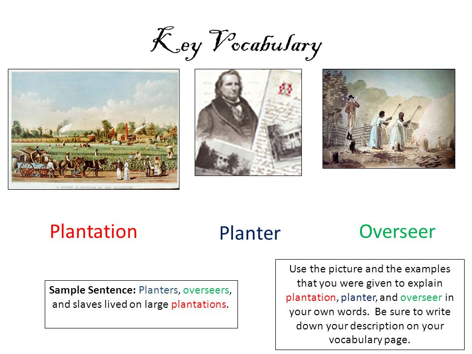 Key Vocabulary Plantation Planter Overseer Use the picture and the examples that you were given to explain plantation, planter, and overseer in your own words.