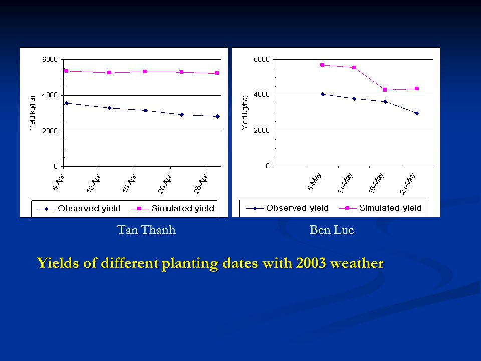 Tan Thanh Ben Luc Yields of different planting dates with 2003 weather
