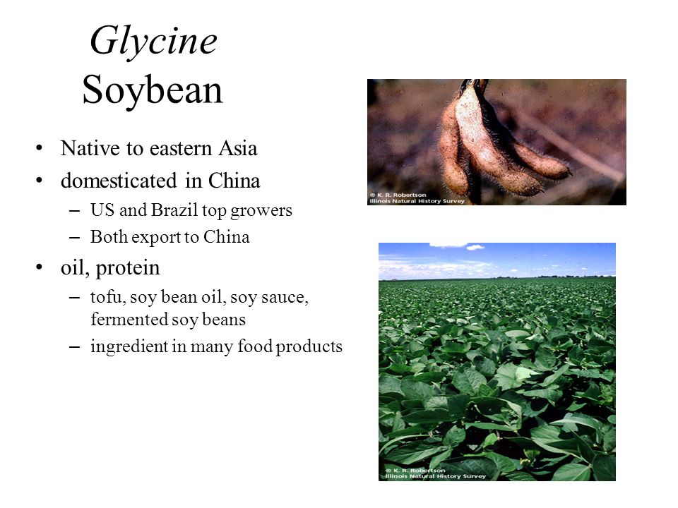 Glycine Soybean Native to eastern Asia domesticated in China –US and Brazil top growers –Both export to China oil, protein –tofu, soy bean oil, soy sa