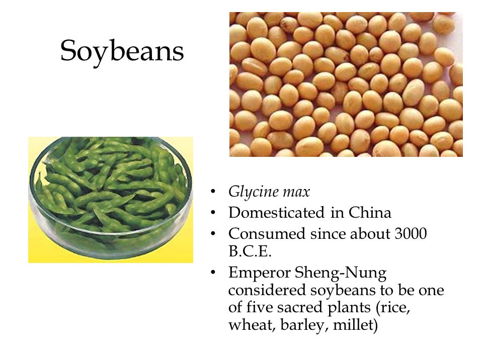 Soybeans Glycine max Domesticated in China Consumed since about 3000 B.C.E. Emperor Sheng-Nung considered soybeans to be one of five sacred plants (ri