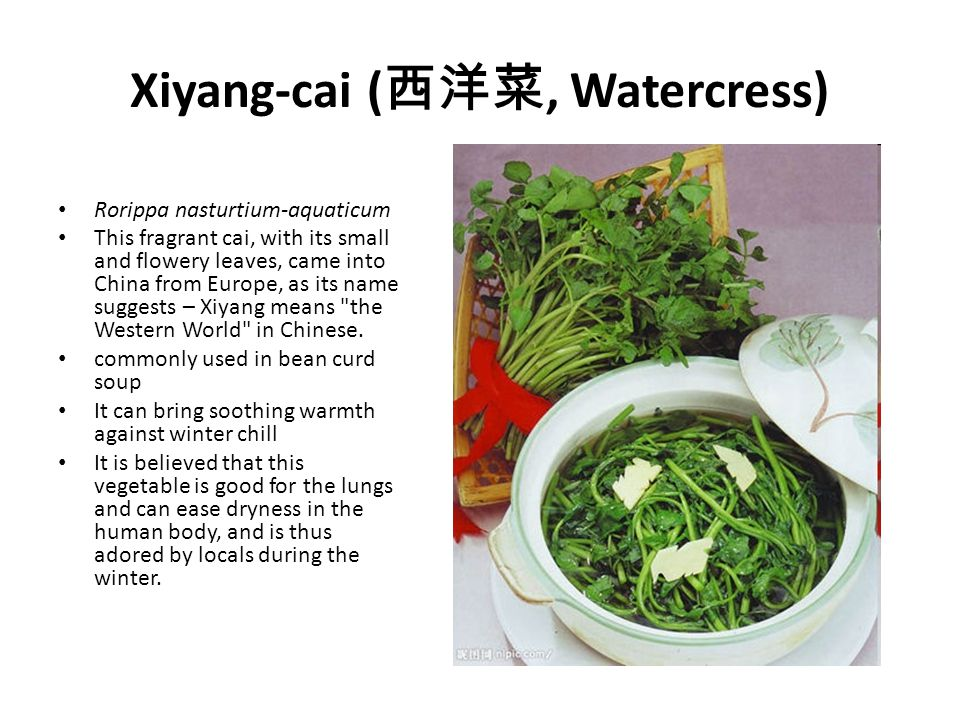 Xiyang-cai ( 西洋菜, Watercress) Rorippa nasturtium-aquaticum This fragrant cai, with its small and flowery leaves, came into China from Europe, as its name suggests – Xiyang means the Western World in Chinese.