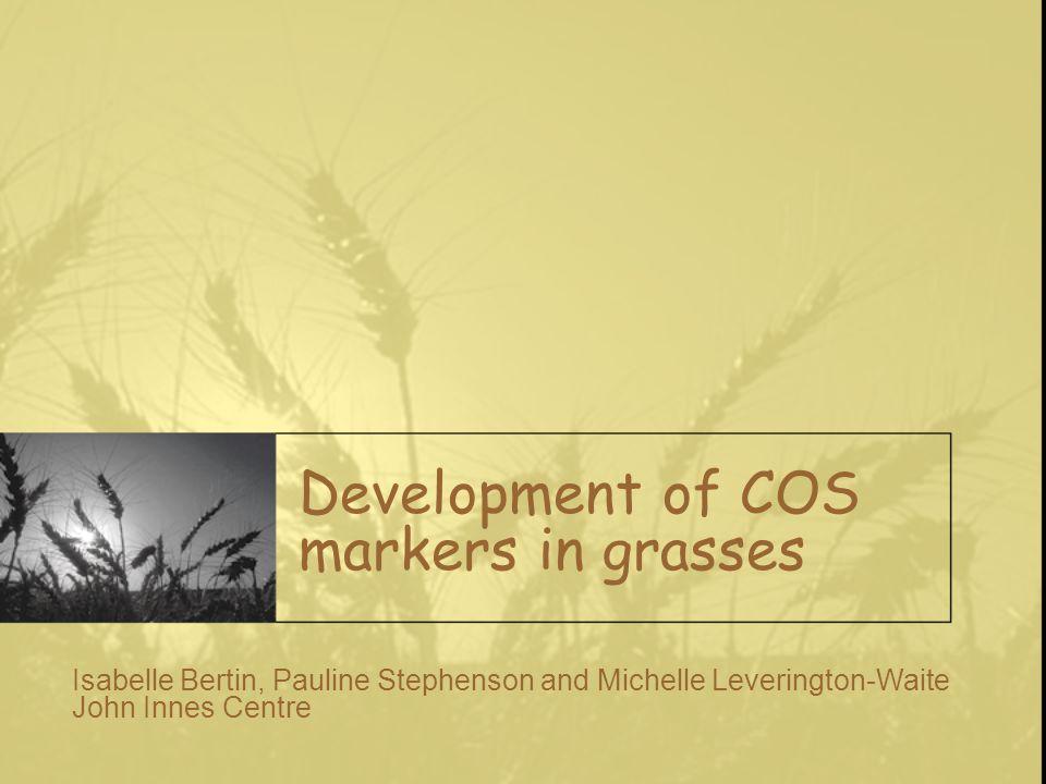 Development of COS markers in grasses Isabelle Bertin, Pauline Stephenson and Michelle Leverington-Waite John Innes Centre