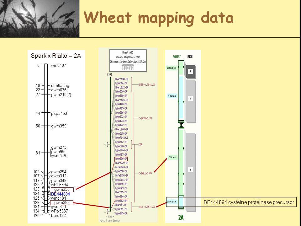 Wheat mapping data BE444894 cysteine proteinase precursor gwm210(2) wmc4070 stm8acag19 gwm63622 27 psp315344 gwm35956 gwm275 gwm95 81 gwm294102 gwm312107 gwm349117 wPt-6894122 gwm356 123 BE444894 124 wmc181125 gwm382129 gwm311131 wPt-5887134 barc122 135 gwm515 Spark x Rialto – 2A
