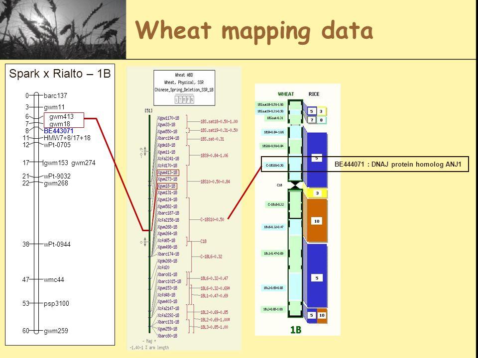 Wheat mapping data BE444071 : DNAJ protein homolog ANJ1 barc1370 gwm113 gwm4136 gwm187 BE4430718 HMW7+8/17+1811 wPt-070512 gwm153gwm27417 wPt-903221 gwm26822 wPt-094438 wmc4447 psp310053 gwm25960 Spark x Rialto – 1B