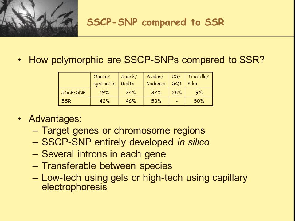 SSCP-SNP compared to SSR How polymorphic are SSCP-SNPs compared to SSR? Advantages: –Target genes or chromosome regions –SSCP-SNP entirely developed i