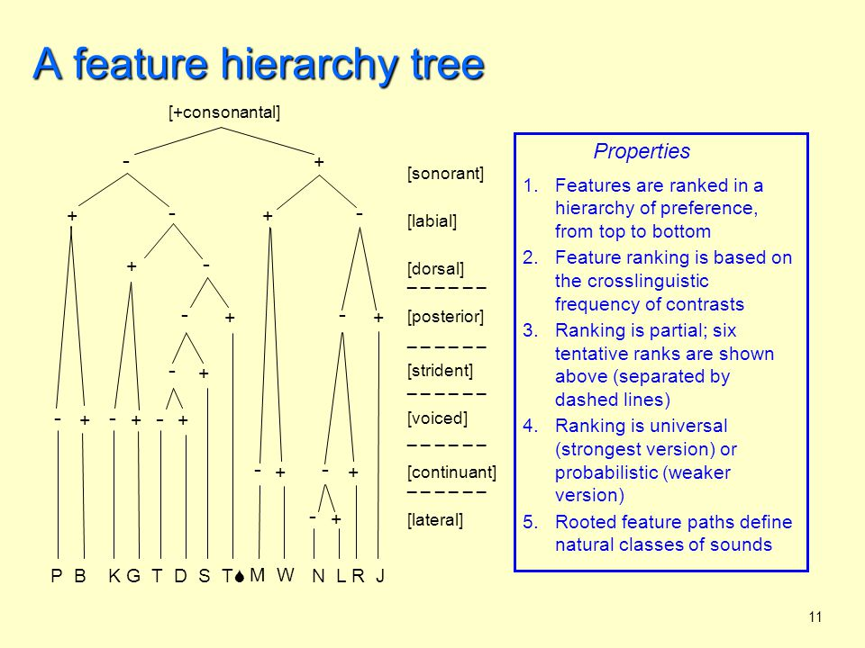 12 A feature hierarchy tree Constraints on tree construction 1.