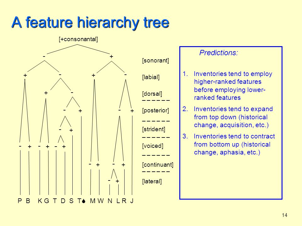 14 A feature hierarchy tree Predictions: 1.