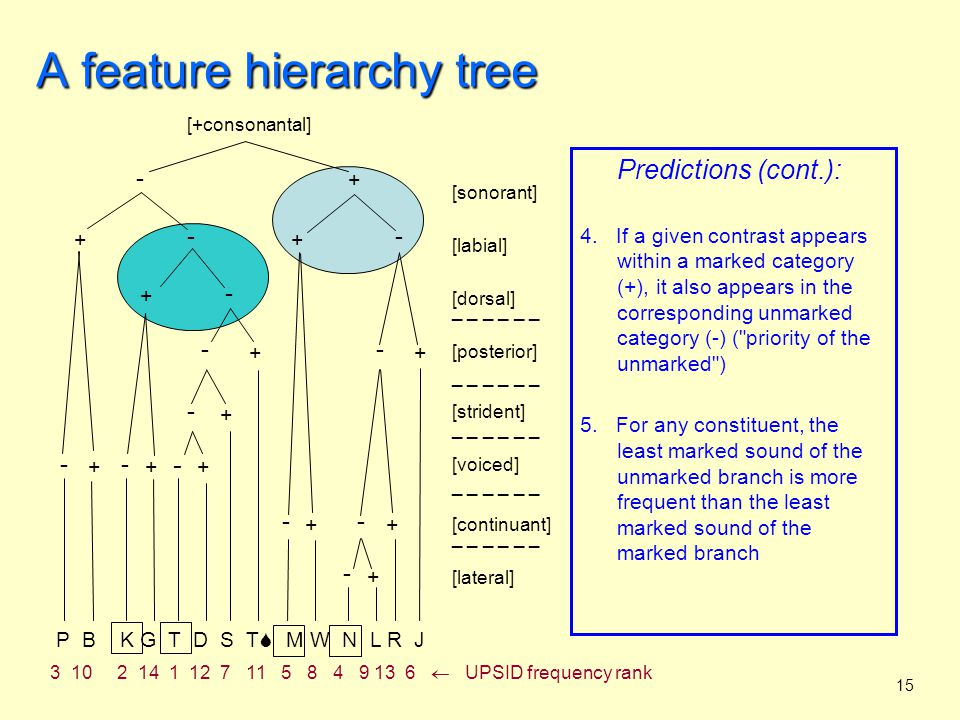 16 The two models compared feature geometry tree feature hierarchy tree what does it model?segmentssegment inventories universal structure?yes phonetic motivation?mostly articulatorymostly auditory predicts rule types?yesno predicts inventory structure.