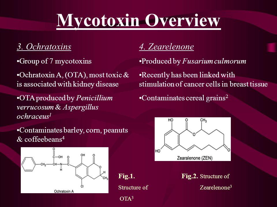Mycotoxin Overview 5.Fumonisins Produced by Fusarium verticillioides, F.