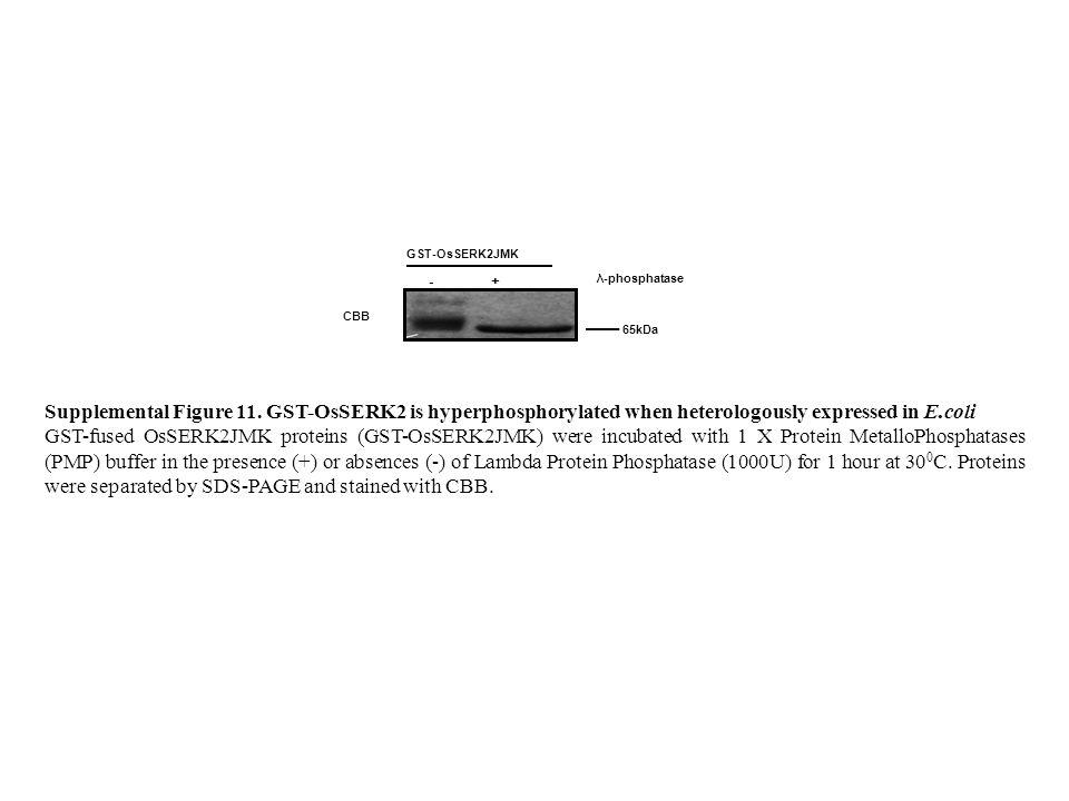 GST-OsSERK2JMK CBB - + λ-phosphatase 65kDa Supplemental Figure 11.
