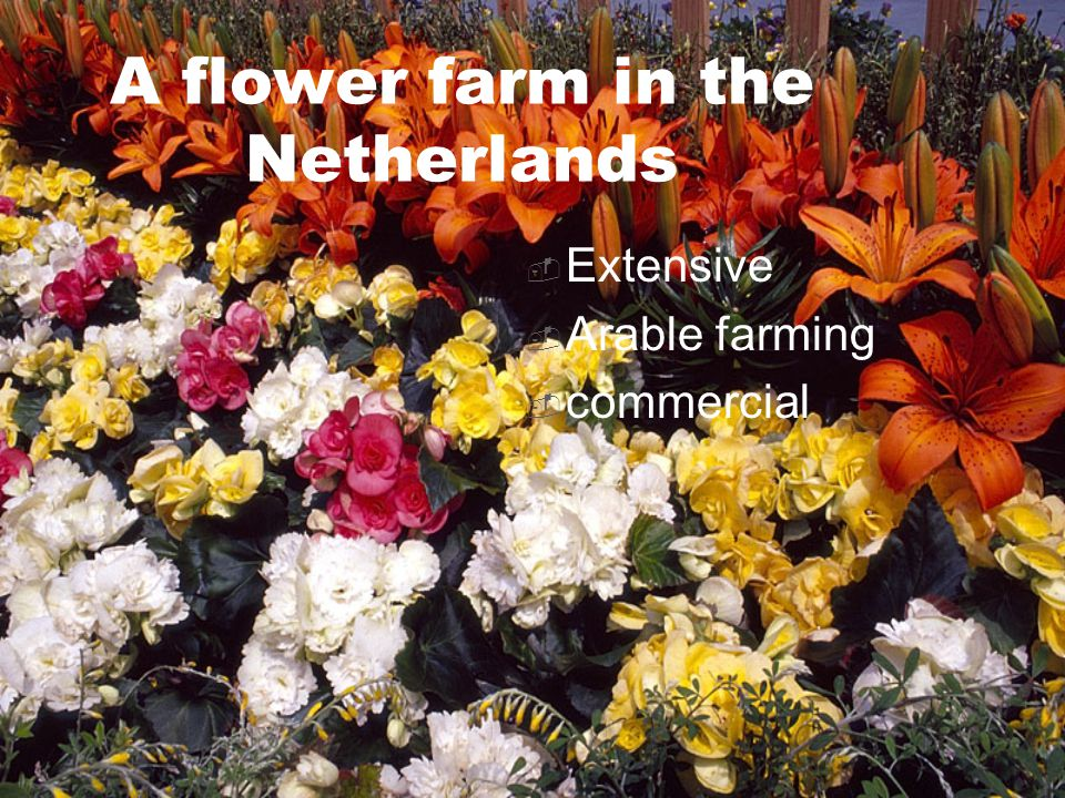 A flower farm in the Netherlands  Extensive  Arable farming  commercial